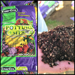 Organic potting soil made with digestate