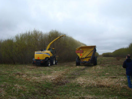 equipment willow harvest