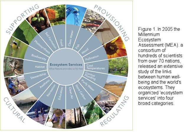 Ecosystem Services Graphic