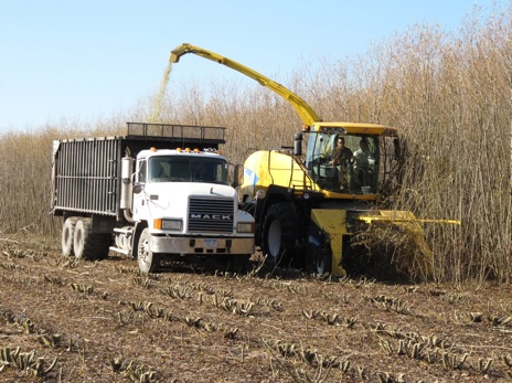 Harvesting willow biomass crops in Auburn, NY with a New Holland single-pass cut-and-chip harvester