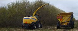 Shrub Willow Harvest