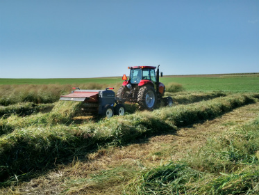 Harvesting switchgrass.