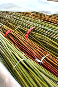 Willow is planted as live stem cuttings that require proper handling until planting.