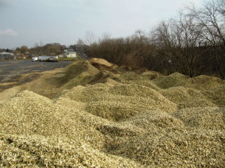Willow biomass chips from a single pass cut and chip operation in temporary storage in upstate NY.
