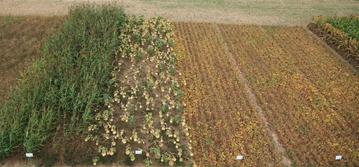 Bioenergy crop test plots