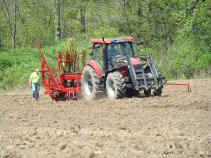 Tractor planting willow